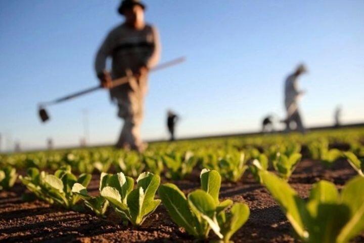 صرفه جویی در منابع با پیاده سازی کشاورزی قراردادی