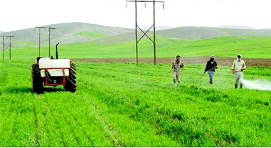 پیش بینی مبارزه با آفت سن در ۲۱۰ هزار هکتار از مزارع غلات آذربایجان غربی
