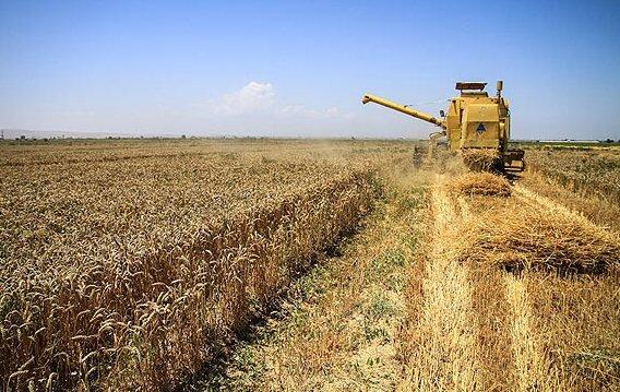 پیش بینی خرید ۱۰.۵ میلیون تن گندم مازاد بر نیاز کشاورزان