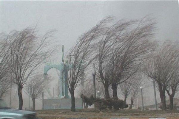 ۲۶ اصله درخت به دلیل وزش تندباد در قزوین شکسته شد