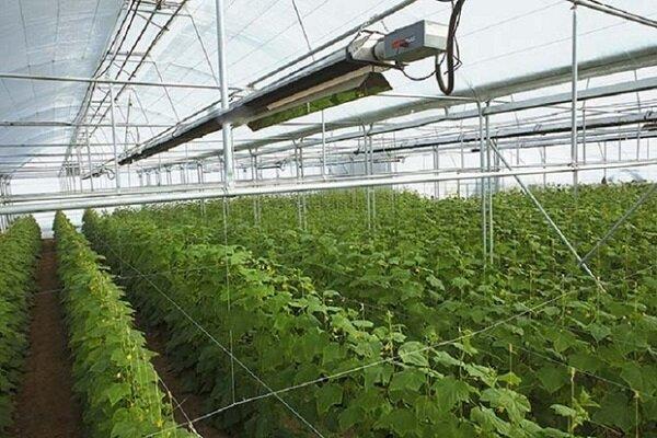 کمبود تولید خیار در استان یزد؛ سرمازدگی گلخانهها نیازمند برنامهریزی است