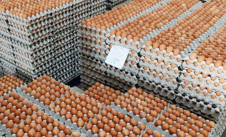 سناریوی دامنه دار قاچاق تخم مرغ از همدان به عراق