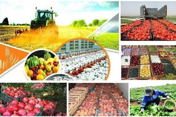 ۴۵۶ هزار تن از محصولات باغی زنجان برداشت شده است