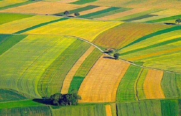 بحران خشکسالی در ۹۸.۸ درصد مساحت زنجان/ کشت محصولات کم آب کاهش یافت!