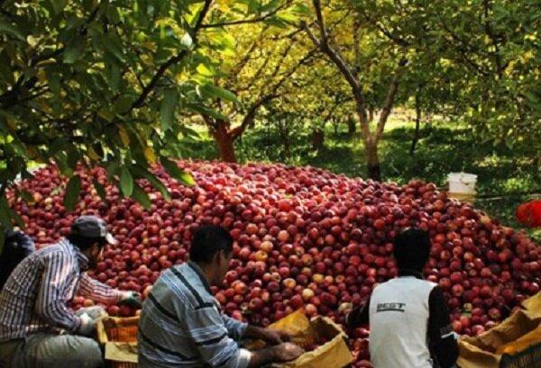 تولید ۵ میلیون تن محصولات کشاورزی با کاهش زیر کشت در آذربایجانشرقی