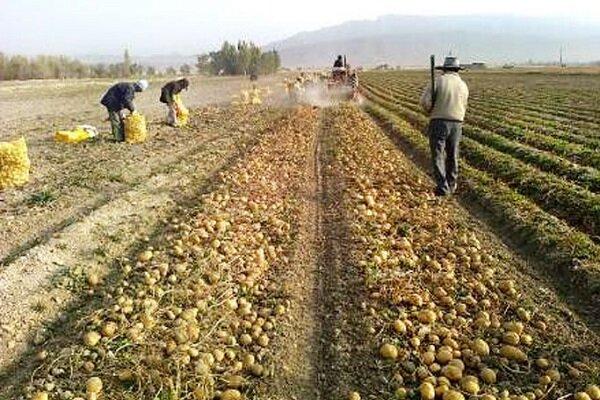 کشت محصولات کم آببر در زنجان مورد توجه قرار گیرد