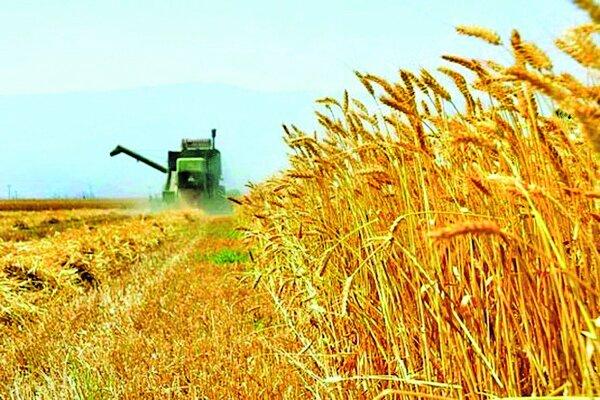 تندباد ۵۰ میلیارد تومان به بخش کشاورزی گلستان خسارت زد