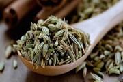 قطب تولید رازیانه کشور چشم انتظار فرآوری محصول؛ دلالان ریشه گیاهان دارویی را میخشکانند