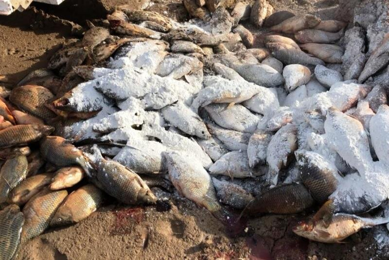 «اگزوتیک» ویروسی به جان صنعت ماهی خوزستان؛ نفس صادرات بند آمد
