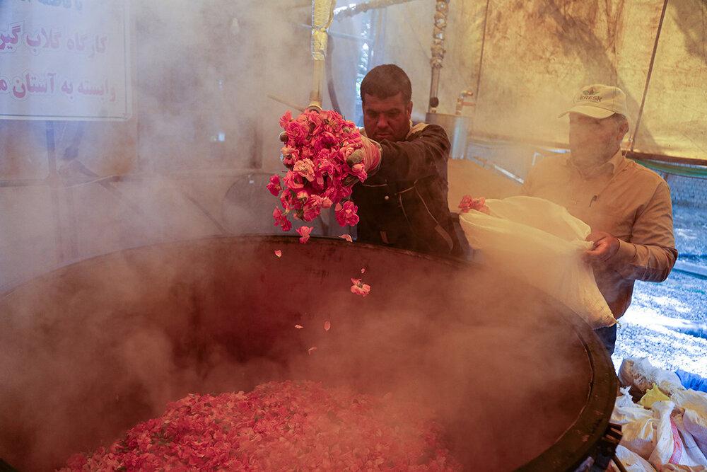«قمصر مشهد» در انتظار سرمایهگذار؛ گلهای «فرخد» بوی دلار میدهد