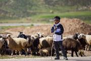 عشایر در محاصره خشکسالی؛ مراتع فقیر تولید را تهدید میکند