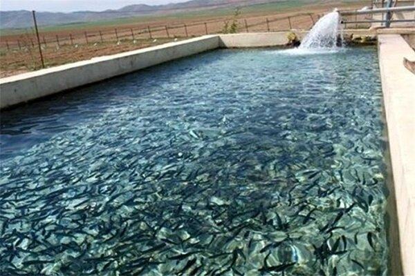 توان تولید ۱۰۰۰ تن ماهی در شهرک شیلات مراغه
