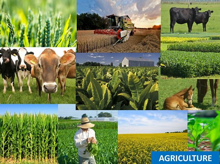 ۱۴۶ میلیارد تومان تسهیلات در بخش کشاورزی ایلام پرداخت شد
