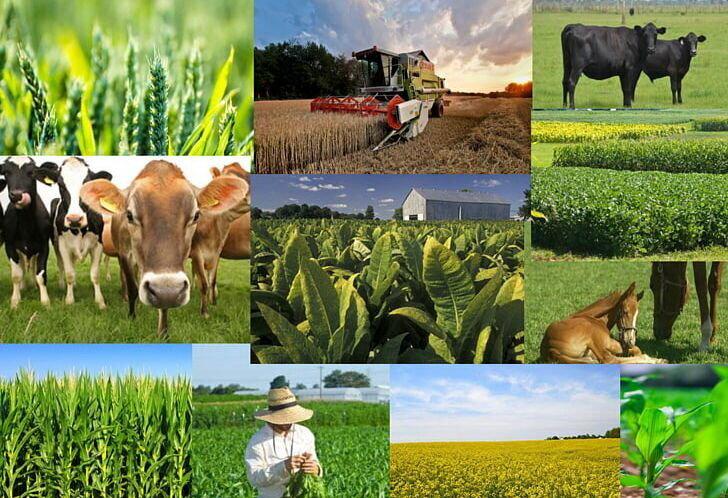 افزایش نرخ تورم تولیدکننده زراعی