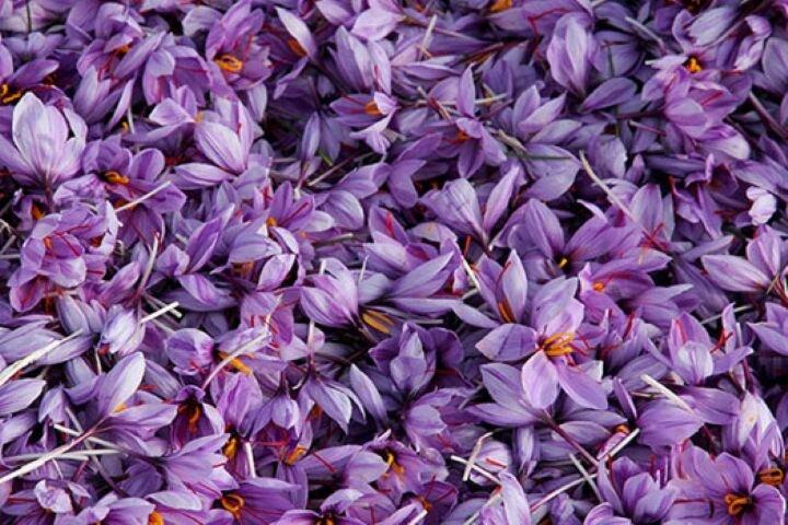 تنها ۱۵ تن صادرات زعفران در فرودین و اردیبهشت