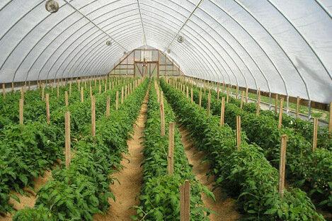 تولید سالانه ۲۴ میلیون شاخه گل در البرز/ گلخانه های البرز ۵۰ هکتار افزایش می یابد