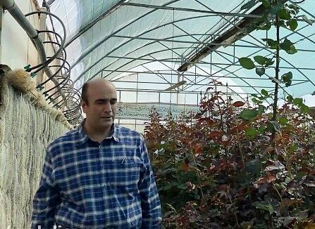 ۹۹ درصد تولیدات گل خراسان رضوی خوراک دامها شد