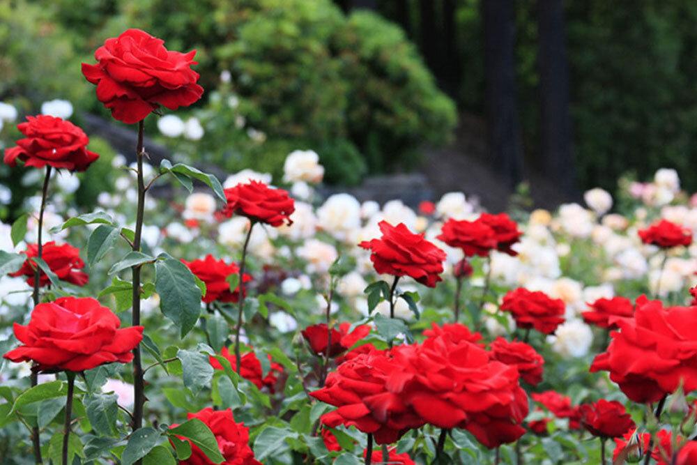 باغهای گردشگری «ارم» در استان فارس ساخته میشود