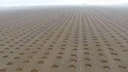 کاشت ۶ میلیون اصله نهال در اراضی ملی ایلام