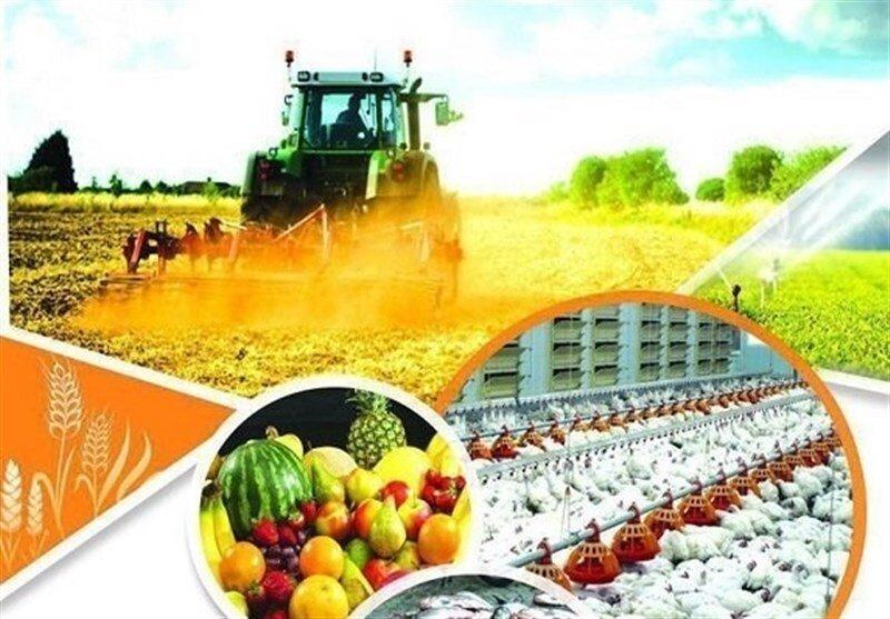 ظرفیت تامین غذایی ۳۰۰ میلیون نفر با توان کشاورزی کشور وجود دارد