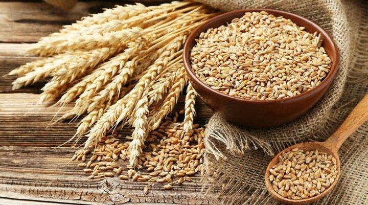 خرید یکمیلیون و ۵۰۰ هزار تن گندم در ۱۸ استان کشور