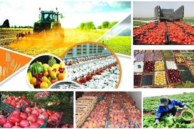 شبکههای تعاون روستایی همدان ۵۳ هزار و ۶۵۸ تن محصول کشاورزی خریداری کردند