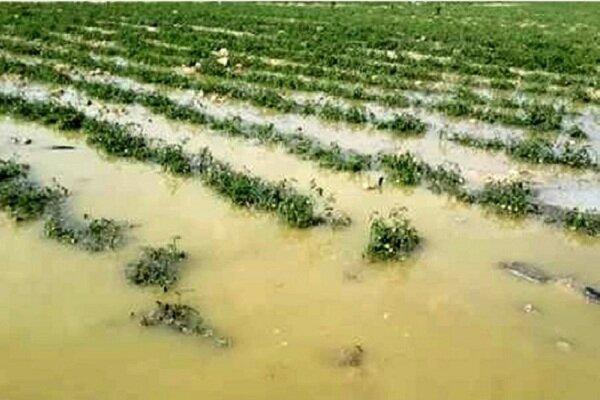 ۵۷۰ میلیارد تومان اعتبار جبران خسارت سیل در بخش کشاورزی لرستان هزینه شد