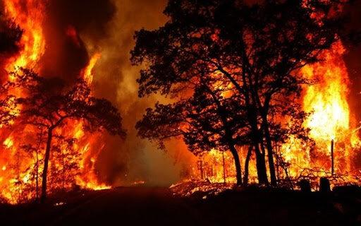 سرمایه ای که خاکستر شد؛ ارزش هر درخت بلوط ۶ میلیارد ریال