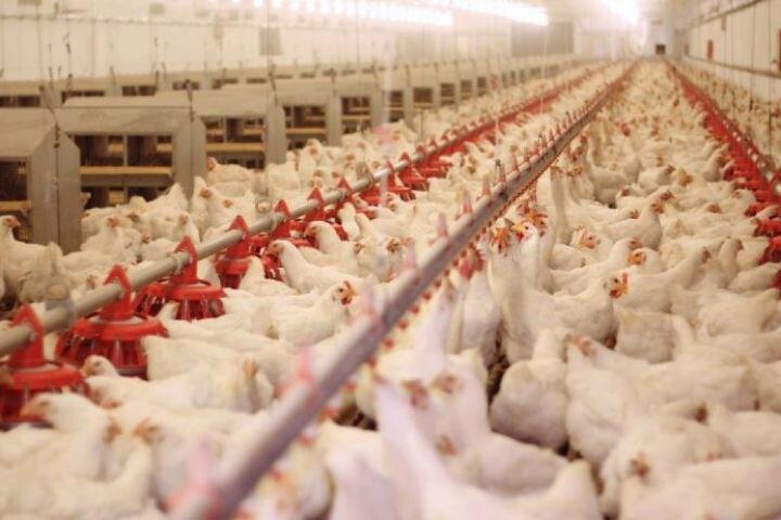 قیمت هر کیلو مرغ گرم در کهگیلویه و بویراحمد به ۲۰ هزار و ۴۰۰ تومان رسید