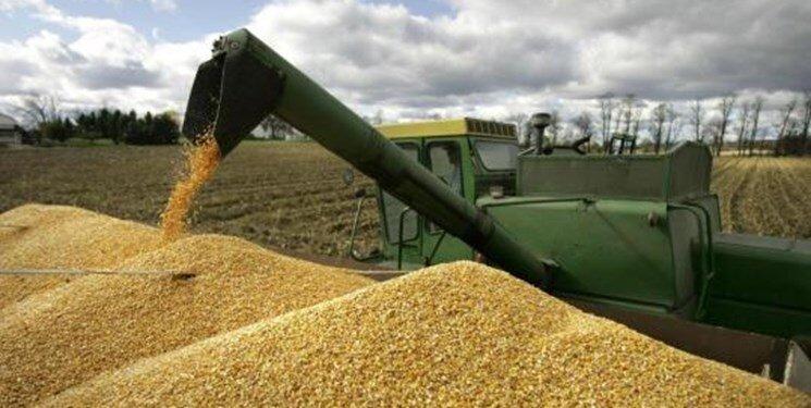 خرید ۳۰ هزار تن گندم در مازندران