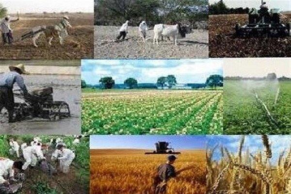 حدود ۵هزار فرصت شغلی در بخش کشاورزی کردستان ایجاد شد