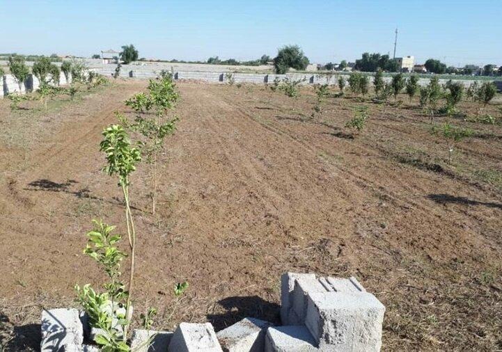 کشت محصولات باغی در ۷۰۰ هکتار از اراضی شیبدار کرمانشاه