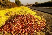 کمبود ظرفیت سردخانهای و به تاراج رفتن دسترنج باغداران در استان همدان
