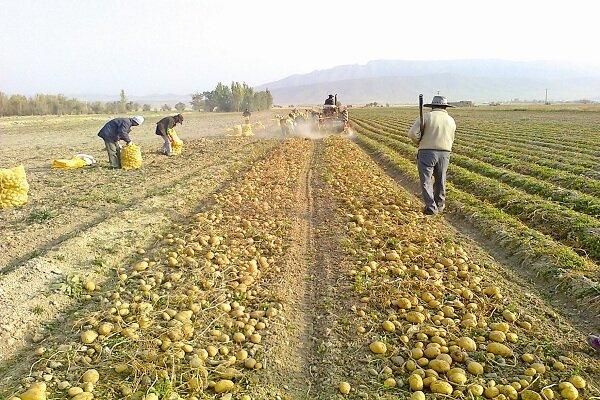 کرونا هزار و ۶۸۰ میلیارد ریال به واحدهای کشاورزی قزوین خسارت وارد کرد