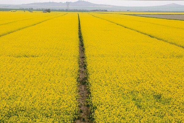 ارزش اقتصادی محصولات پاییزه مازندران ۱۵ هزار میلیارد ریال است