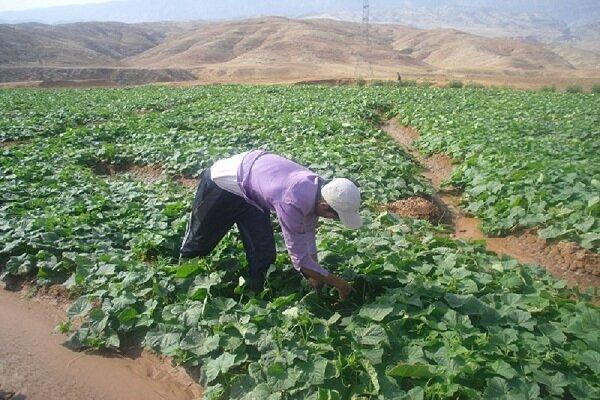 کاهش ۱۰ هزار میلیارد ریالی تولیدات کشاورزی خراسان شمالی