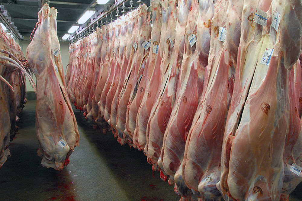 جزئیات جدید از سرنوشت ۳۲۰ تن گوشت وارداتی| محموله به خوراک ماهیها تبدیل می شود
