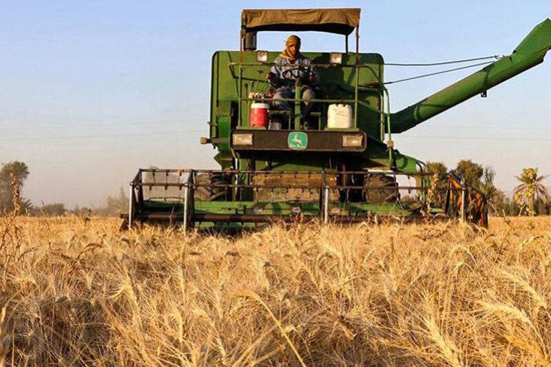 خرید ۵هزار تن جو از کشاورزان قزوین پیشبینی میشود