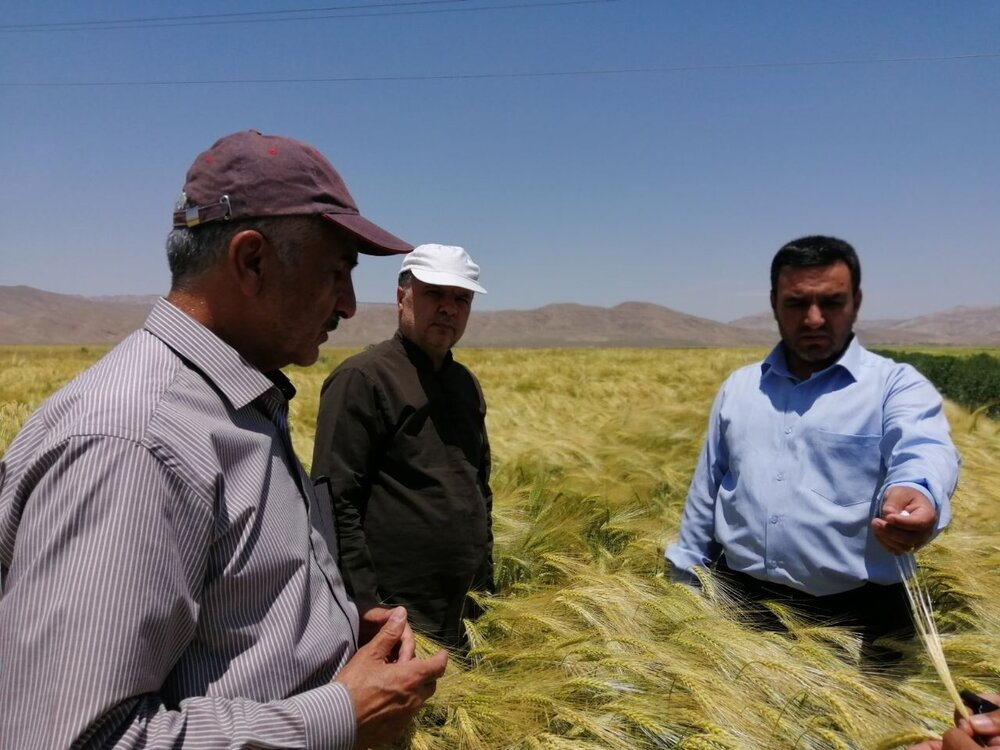 بهره وری؛ عامل افزایش تولید محصولات کشاورزی