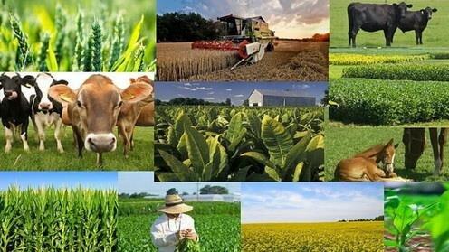 افزایش نرخ تورم تولیدکننده زراعی سال ۹۹