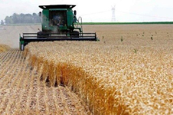 قیمت پائین خرید گندم و هزینه بالای برداشت؛ کشاورزان راضی نیستند