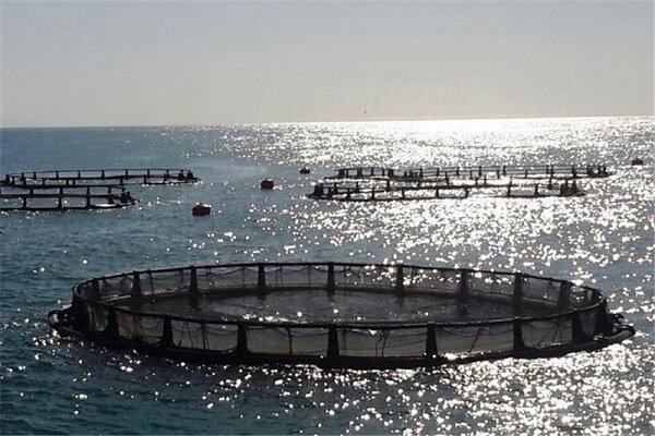 صنعت پرورش ماهیان در قفس بومی سازی شده است
