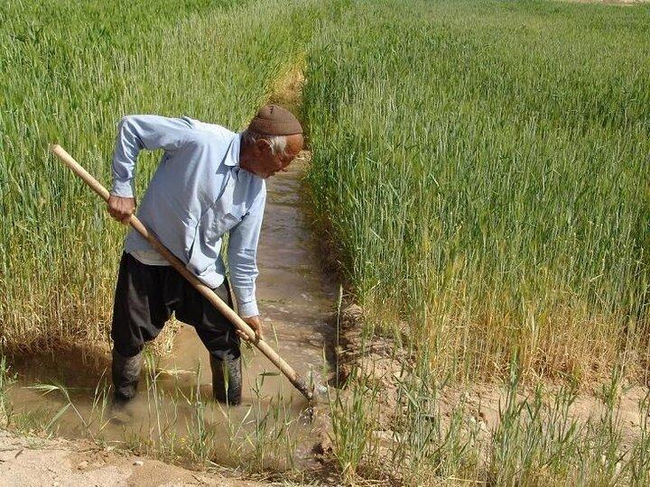 بی برنامگی، دسترنج کشاورزان در فصل برداشت را از بین میبرد