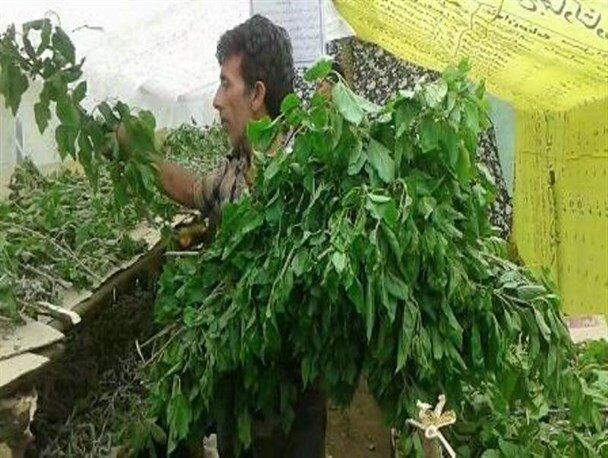 ۴ تن پیله تر ابریشم توسط کشاورزان زنجانی تولید شد