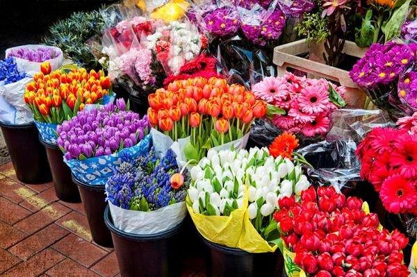۵۴۳ تن گل و گیاه از مازندران روانه بازارهای خارجی شد