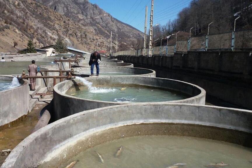 ظرفیت تولید ۱۵ هزار تن ماهی در پشت سدهای ایلام
