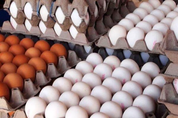 روزانه ۱۰ تن تخم مرغ با نرخ مصوب در البرز توزیع می شود