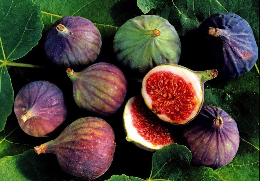 صنایع تبدیلی نیاز باغداری مازندران است   تولید ۷۲ محصول در گلوگاه