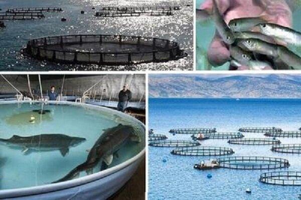 نبود صنایع تبدیلی ماهی چالش مهم در صنعت آبزی پروری زنجان