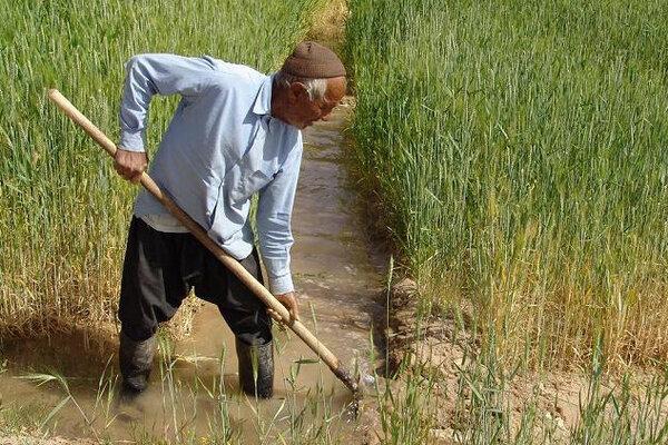 محصول روستائیان روی دستشان مانده است/ حمایتهای پسینی فراموش نشود